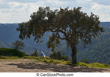 pulo, olive, guadiana, portugal, beau, chute eau, alentejo, rivière, arbre, lobo, mertola