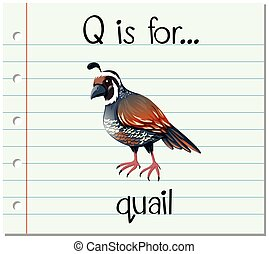 q, caille, lettre, flashcard