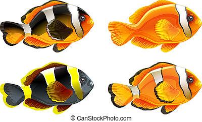 quatre, poissons, coloré