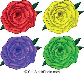 quatre, roses, coloré