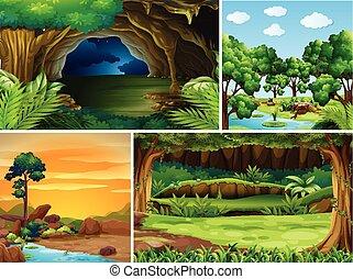quatre, temps, scènes, différent, jour, forêt