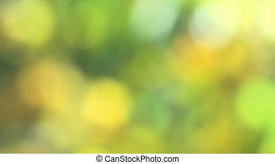 réaliste, bokeh, vert, lumière naturelle