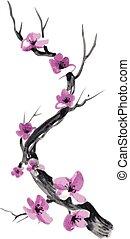 réaliste, fleur, isolé, arrière-plan., sakura, blanc