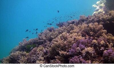récif corail, moule
