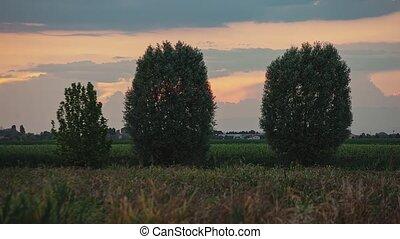 récolte, arbres