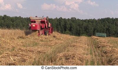 récolte, blé, combiner