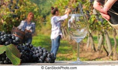 récolte, ensoleillé, raisin, jour