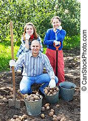 récolte, famille, jardin, pommes terre