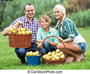 récolte, famille, pommes, jardin