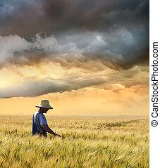 récolte, paysan, sien, vérification, blé