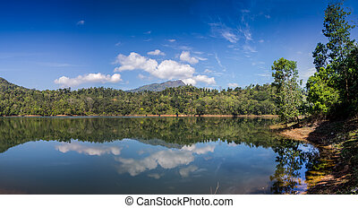 réflexion arbre, pin, lac