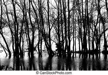 réflexions, arbre