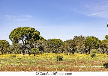 région, arbres, algarve, bouchon