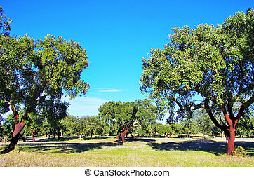 région, bouchon, arbre, alentejo, portugal