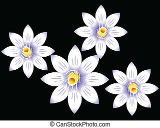 résumé, fleur, blanc