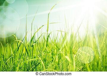 résumé, herbe, fond, nature