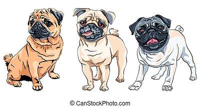 race, carlin, vecteur, mignon, ensemble, chien