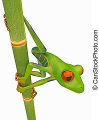rainette, tige, vert a regardé, bambou, rouges