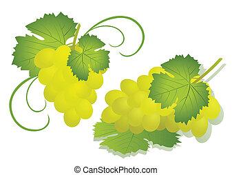 raisin, illustration, isolé, -, vecteur, blanc