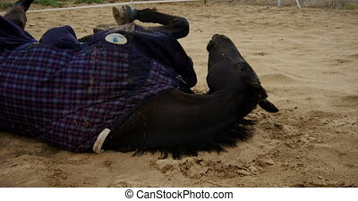 ranch, obtenir, cheval, mensonge, 4k, haut