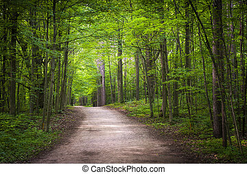 randonnée, forêt, vert, piste