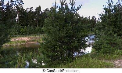 randonneur, promenade enfonce, forêt