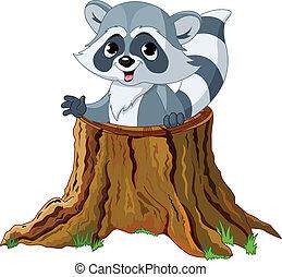 raton laveur, souche, arbre