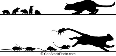 rats, chasser, chat