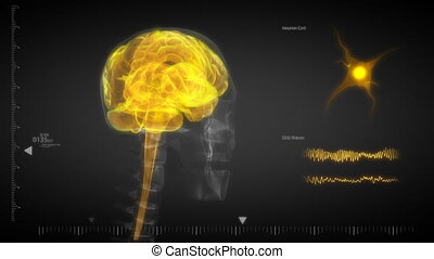 rayon x, flashin, cerveau, humain, balayage
