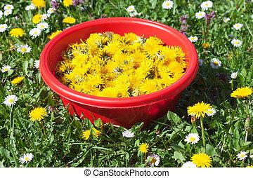 recueilli, fleur, pré, pissenlit
