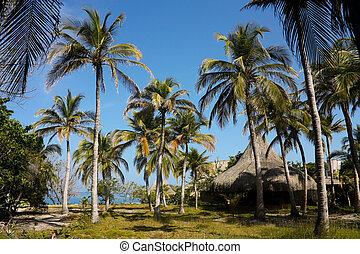reef., corail, islands., colombie, antilles, rosario