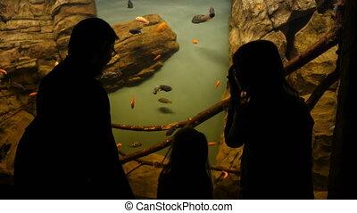 regarder, aquarium, gens, fish
