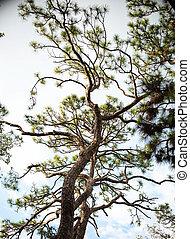 regarder, arbre diverge, haut, ciel