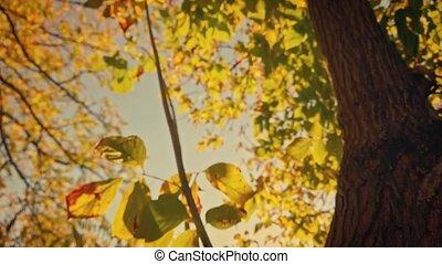 regarder, coup, arbre, brouillé, haut, feuilles, automnal, jaune