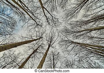 regarder, forêt, haut