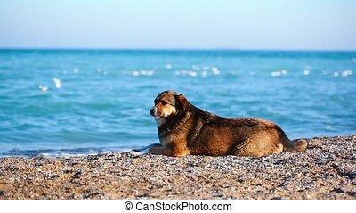 regarder, propriétaire, solitaire, plage, chien