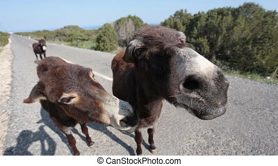 regarder, rigolote, âne, appareil photo
