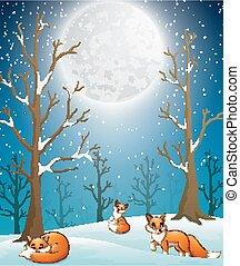 renards, tomber, nuit, neige, fond, hiver, apprécier, mignon