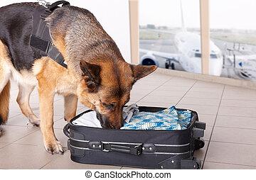 renifler, aéroport, chien