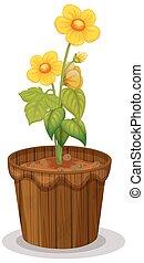 renoncule, fleurs, pot fleurs, jaune