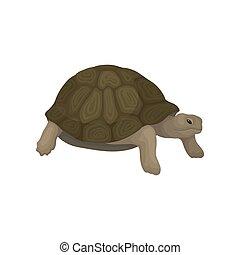 reptile, tortue, animal, illustration, vecteur, fond, blanc