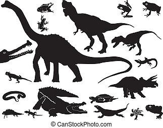 reptiles, collection