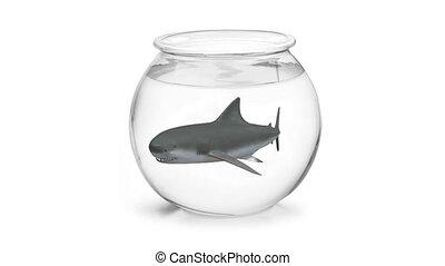 requin, intérieur, fishbowl