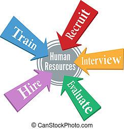ressources, gens, employé, humain, embauche