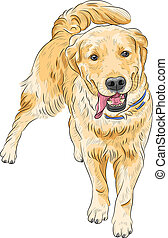 retriever, heureux, labrador, race, vecteur, sourire, croquis, chien