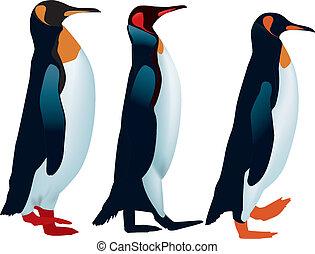 revêtu, pingouins, trois, haut, promenade