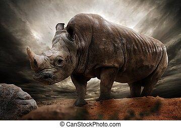 rhinocéros, énorme, ciel, contre, orageux