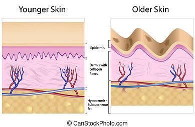ridé, contre, peau lisse