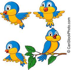 rigolote, ensemble, oiseaux, dessin animé