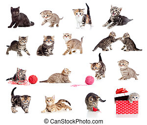 rigolote, peu, chatons, collection., isolé, chats, white., adorable